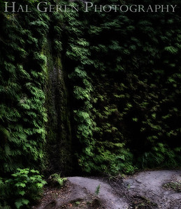 Fern Canyon Prairie Creek Redwoods, California 1708C-FCF3A