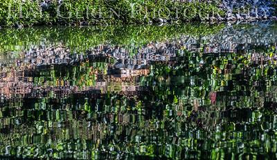 Reflections Lakeshore Park, Newark, California 1805N-FR2