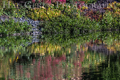 Reflections Lakeshore Park, Newark, California 1805N-FR1