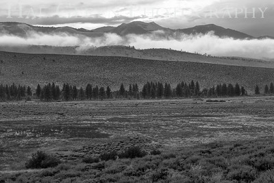 Mountain Mist Eastern Sierra, California 1807S-MM8BW2