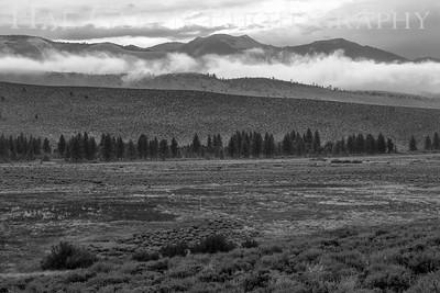 Mountain Mist Eastern Sierra, California 1807S-MM8BW2