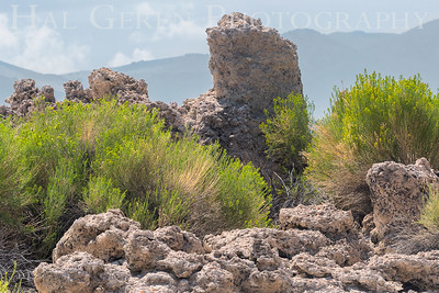 East Mono Lake Tufa Eastern Sierra, California 1807S-T3
