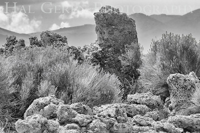 East Mono Lake Tufa Eastern Sierra, California 1807S-T3BW1