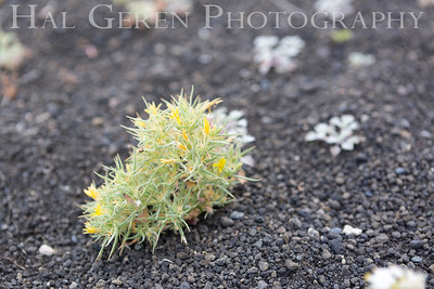 Eastern Sierra, California 1807S-F2