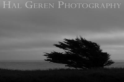 Jughandle State Park Mendocino Coast, California 1305M-J1