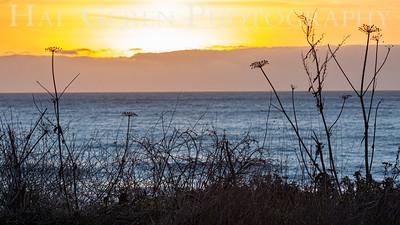 Mendocino Coast 1812M-SW1