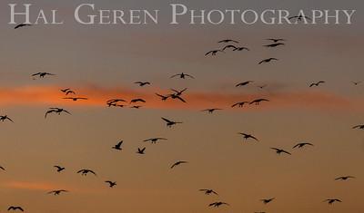 Merced National Wildlife Refuge 2102M-F9