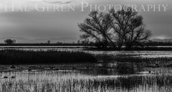 Merced National Wildlife Refuge Merced, California 1503M-M1BW1