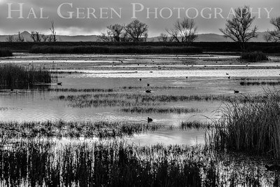 Merced National Wildlife Refuge Merced, California 1503M-S4BW1