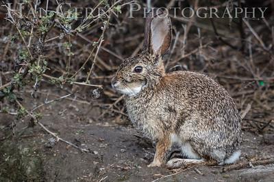 Merced National Wildlife Refuge Merced, California 1503M-