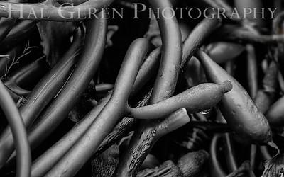 Beached Kelp Tangle