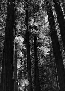 Humboldt, California 1808T-T1BW1