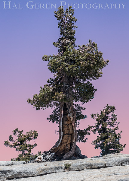 Yosemite, California<br /> 1607Y-T1E1