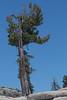 Yosemite, California<br /> 1607Y-T2