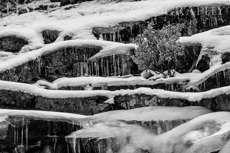201601 Yosemite - Icicles 1 BW1