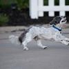 LuLu - Brady - Cooper Play Friends (102 of 109)