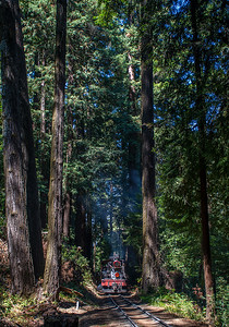 September 5, 2021.   Tall trees above the switchback.