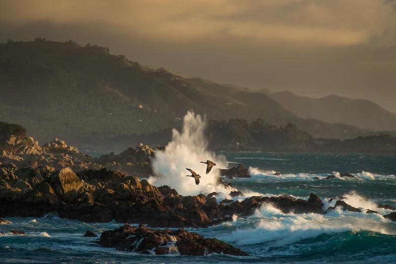 Monterey Coast, CA