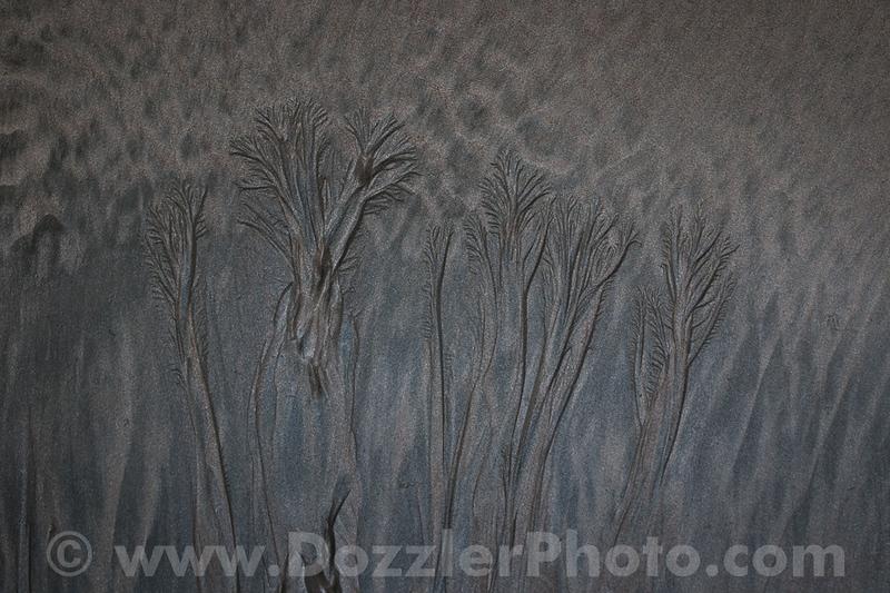 """Sandtrees"", Costa Rica"