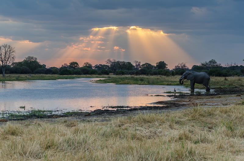 Elephant Khwai River Botswana 3