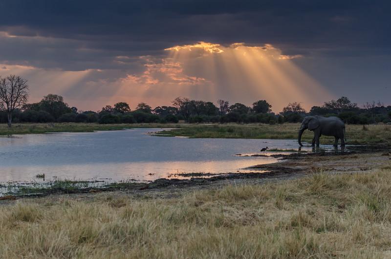 Elephant Khwai River Botswana 5