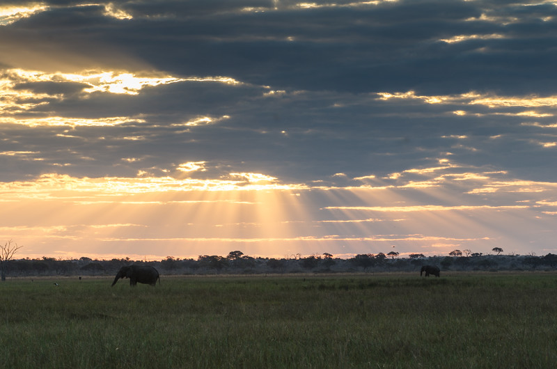 Savuti marsh Botswana 2