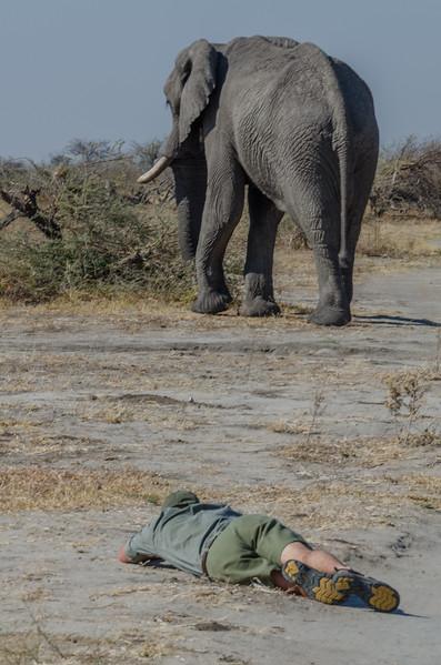 Elephant Savuti Botswana 5