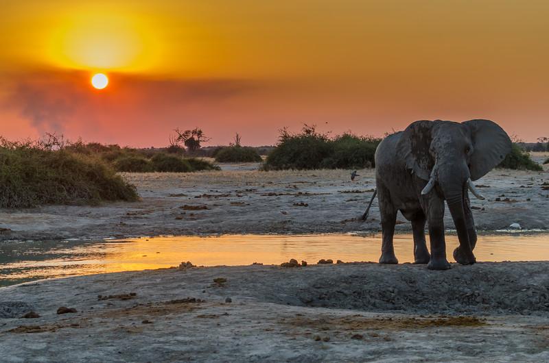 Elephant Savuti Botswana 7