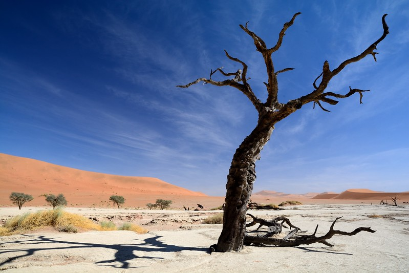 Dead vlei Namib Desert 13