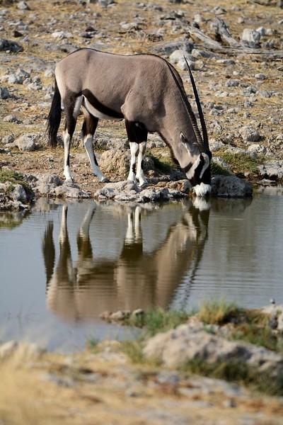 Oryx Etosha 5