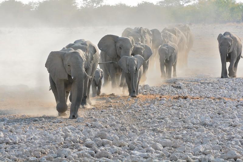 Elephant Etosha 17