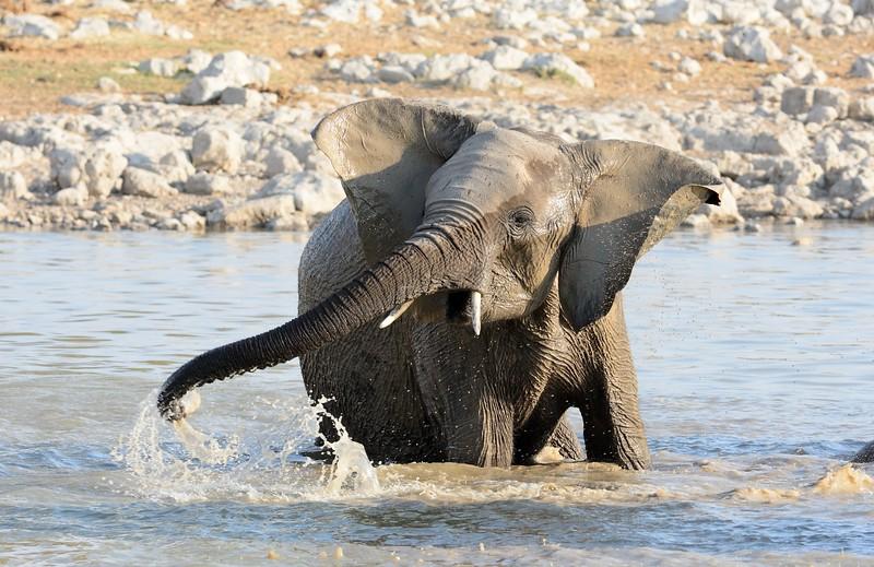 Elephant Etosha 20