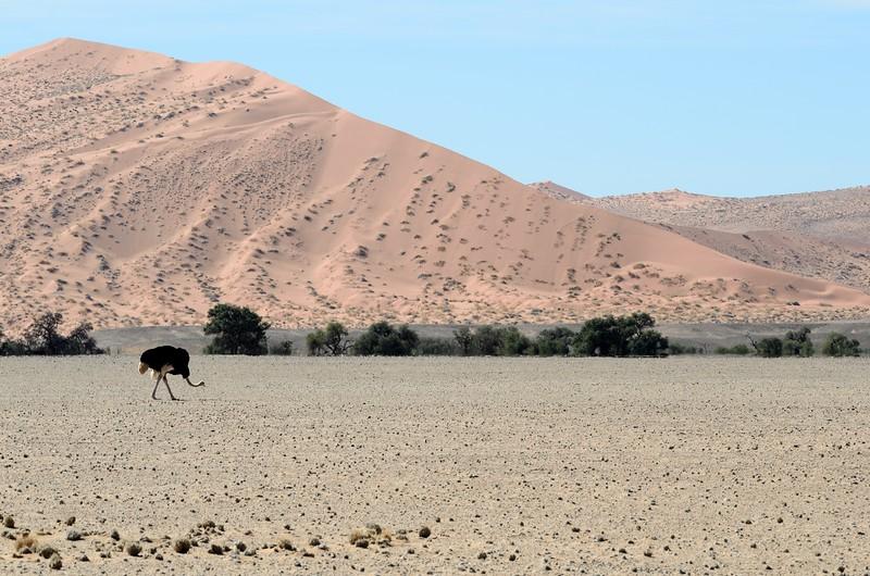 Dune 45 area  Namib Desert 5