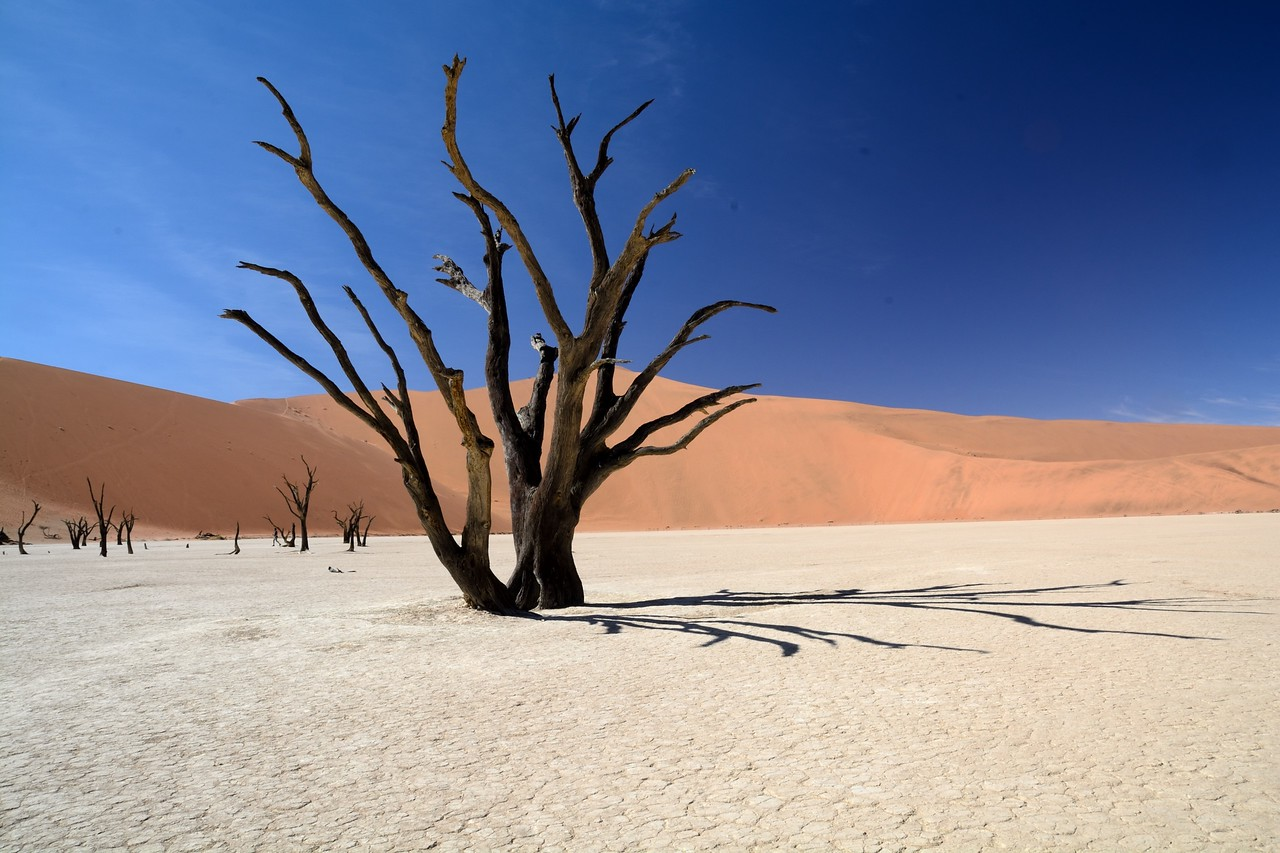 Dead vlei Namib Desert 8