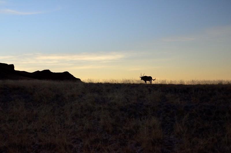 Oryx Namib Desert 6