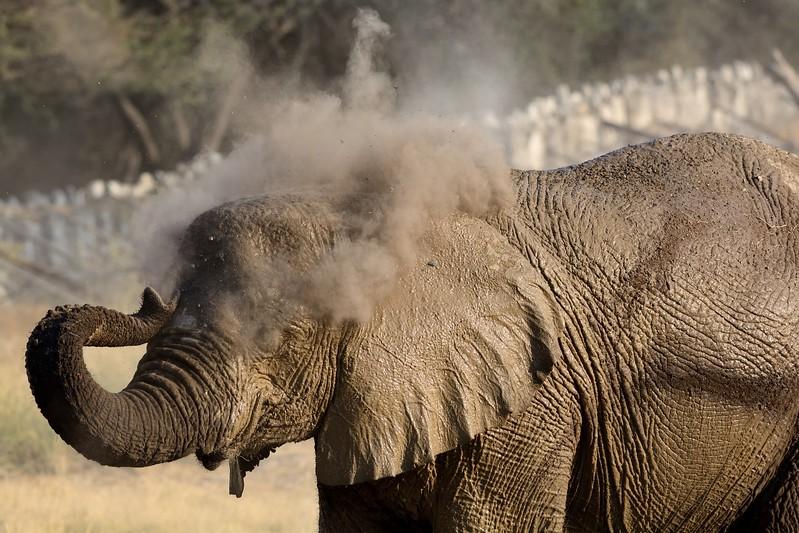 Elephant Etosha 32