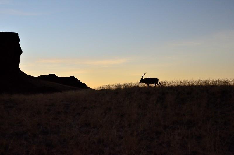 Oryx Namib Desert 3