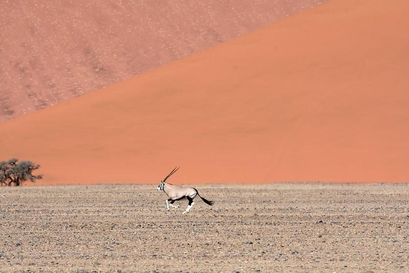 Sossus vlei and Oryx Namib Desert 2