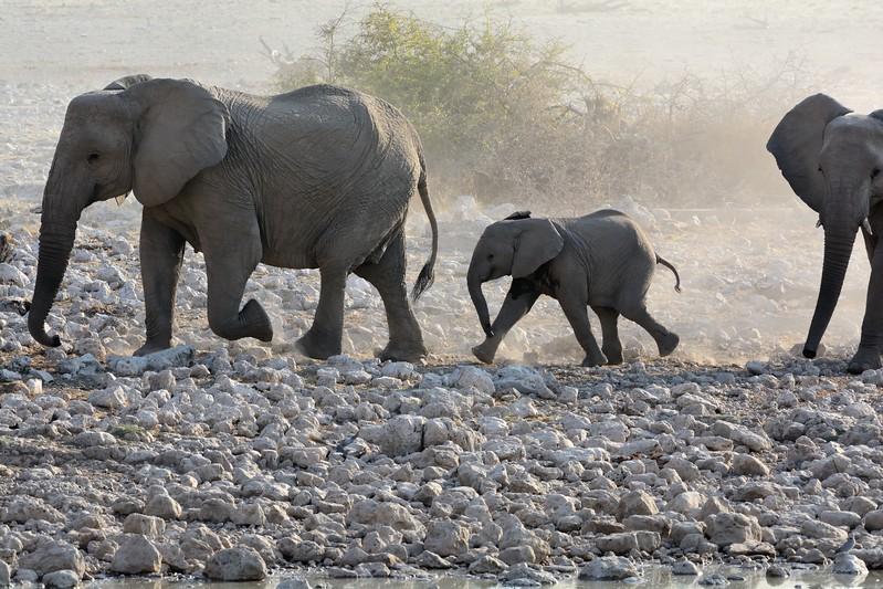 Elephant Etosha 19