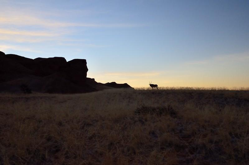 Oryx Namib Desert 5