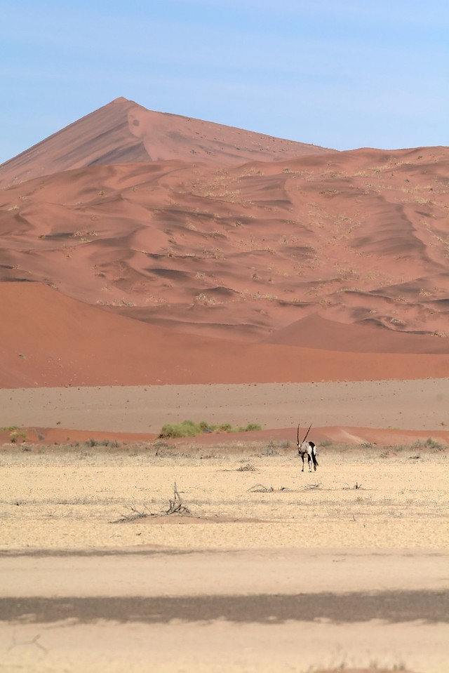 Sossus vlei and Oryx Namib Desert 1