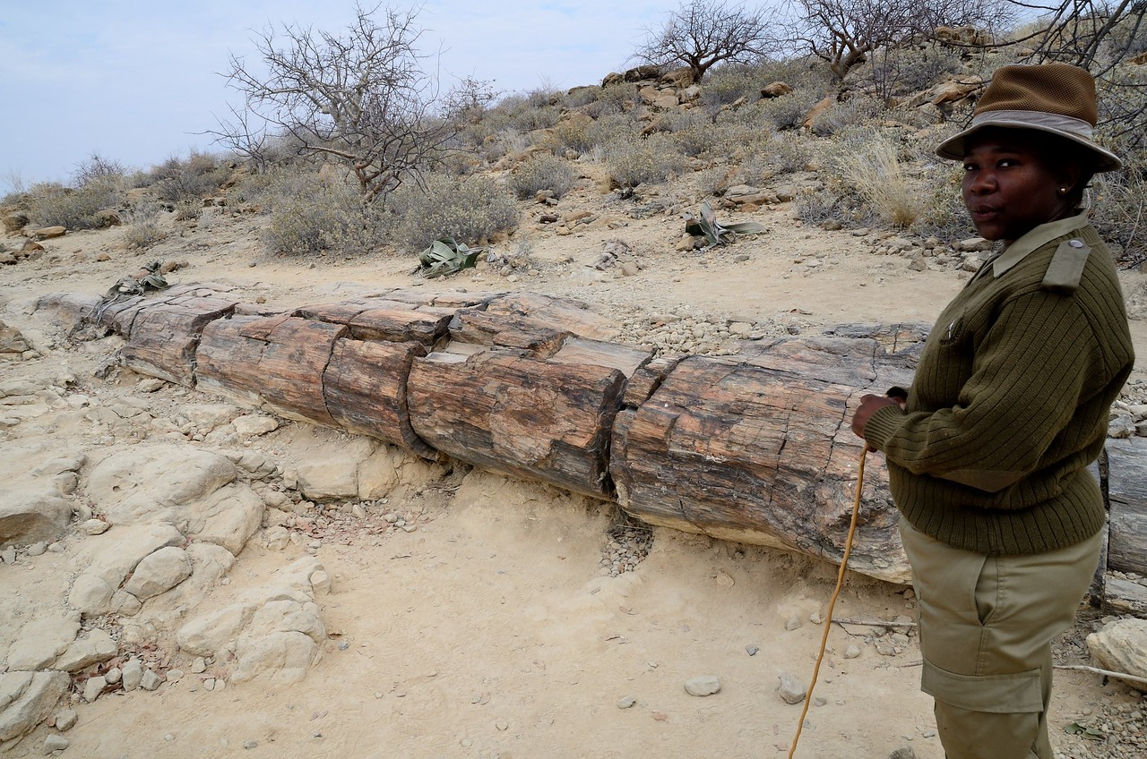 Petrified forest Namib Desert 1