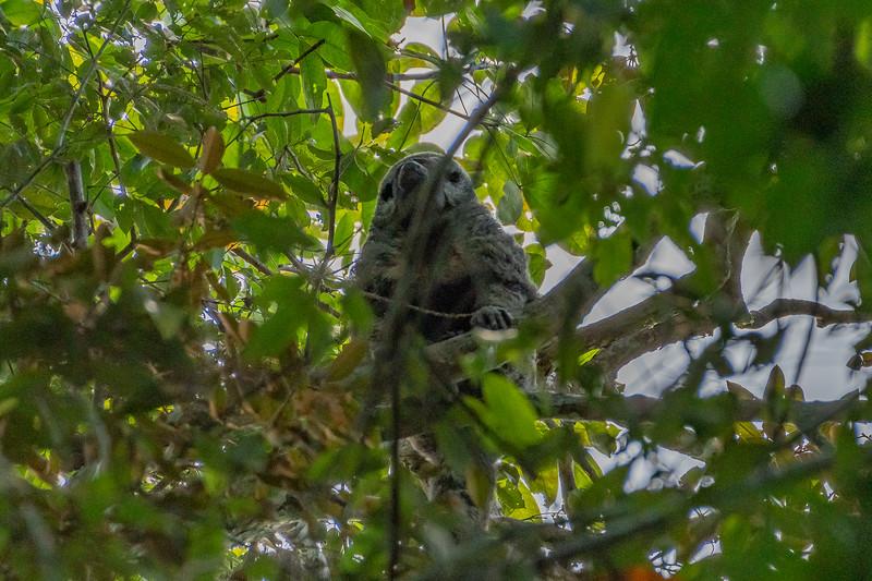 Saki Monkey Manu Wildlife Centre