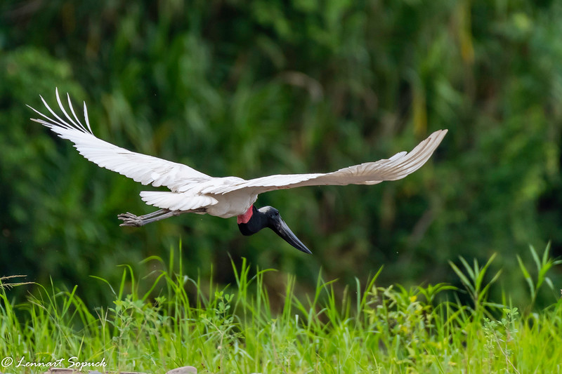 Jabiru Manu Wildlife Centre