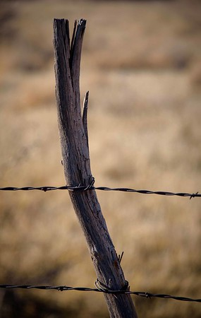 Fenced - In or Out?