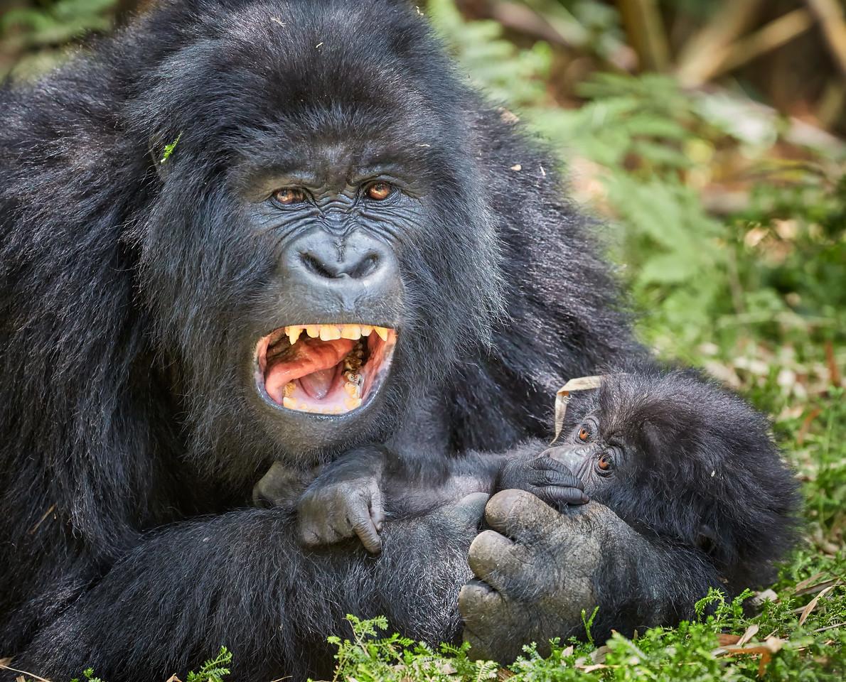 Rwanda Gorillas Hirwa Group