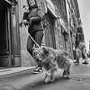 Cani di Milano