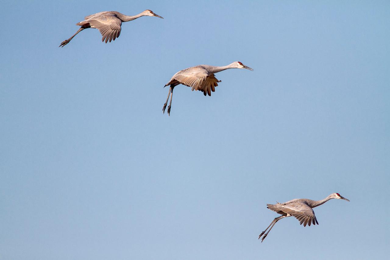 Crane Descent