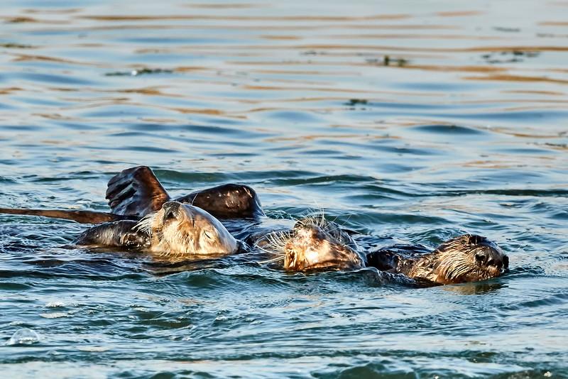 Ndutu Wildebeest Migration 2016