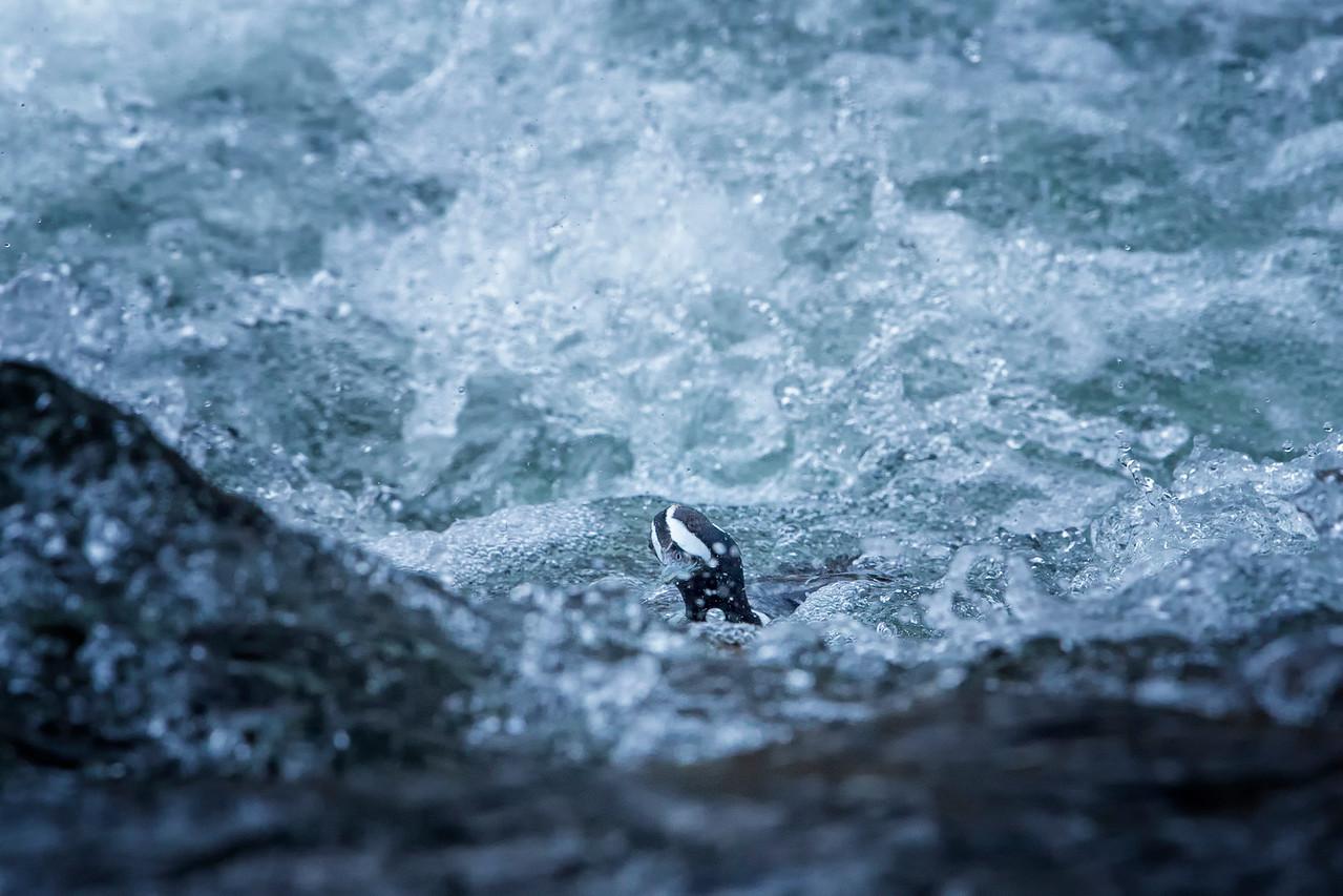 Lost in rapids